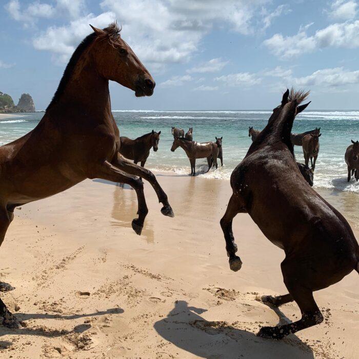 Wild Horses at Nihi Sumba